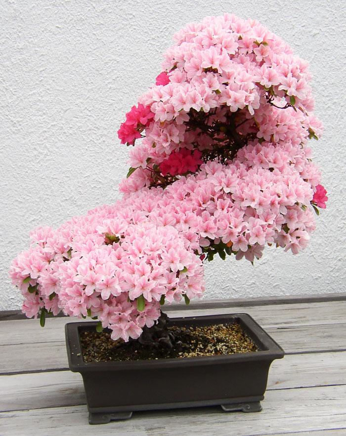 AD-Amazing-Bonsai-Trees-03