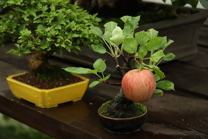 AD-Amazing-Bonsai-Trees-05