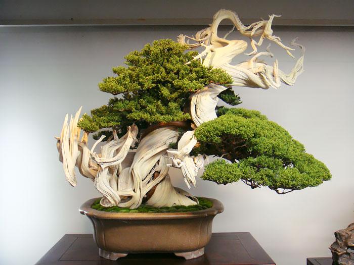 AD-Amazing-Bonsai-Trees-10