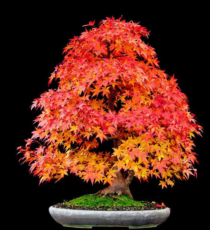 AD-Amazing-Bonsai-Trees-21