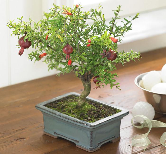 AD-Amazing-Bonsai-Trees-31