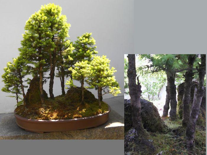 AD-Amazing-Bonsai-Trees-34