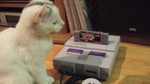 This cat's reaction of a real SNES mimics our reaction to the existence of SNES game references in the Switch's NES emulation files.