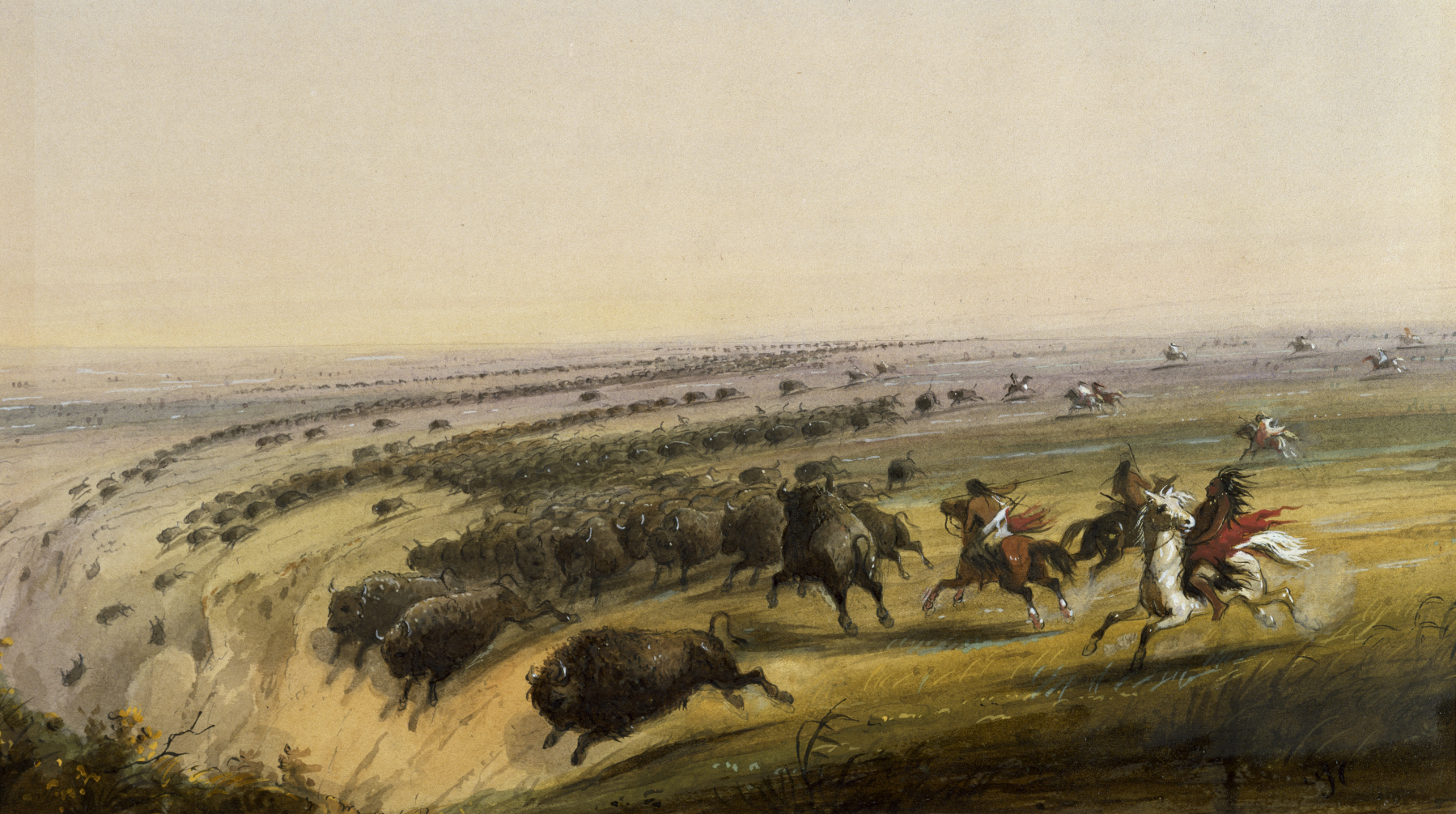 Native Americans Managed The Prairie For Better Bison