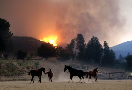 Horses are spooked as the Woolsey Fire moves through the property on Cornell Road near Paramount Ranch on November 9, 2018 in Agoura Hills, California.