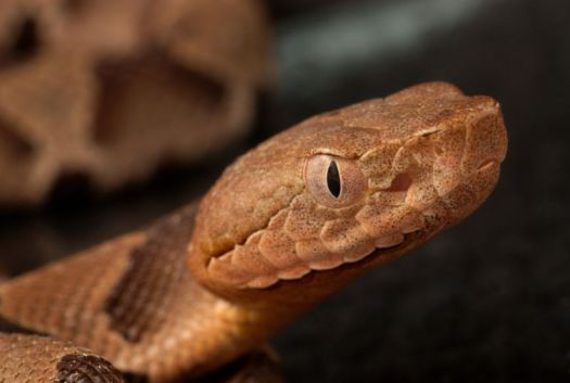 Even this copperhead thinks that's crazy.