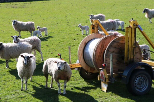 fiber-optic cable reel in a sheep field