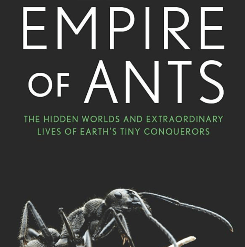 We're living on a planet of ants