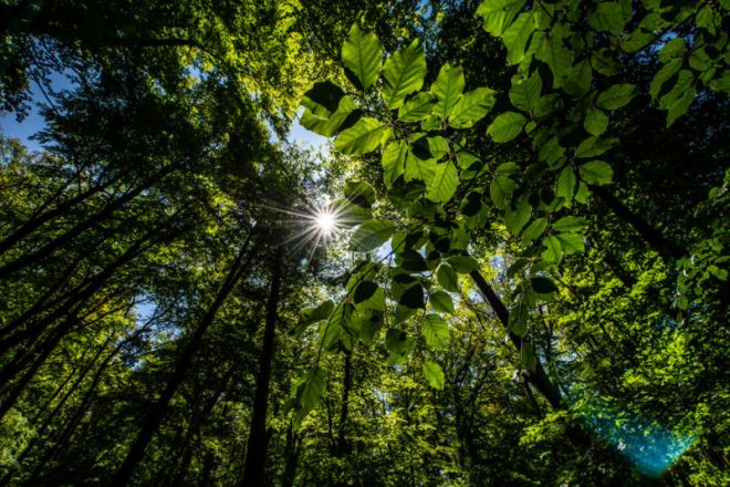 GettyImages-1233149008-800x533 Rewilding: Four tips to let nature thrive | Ars Technical