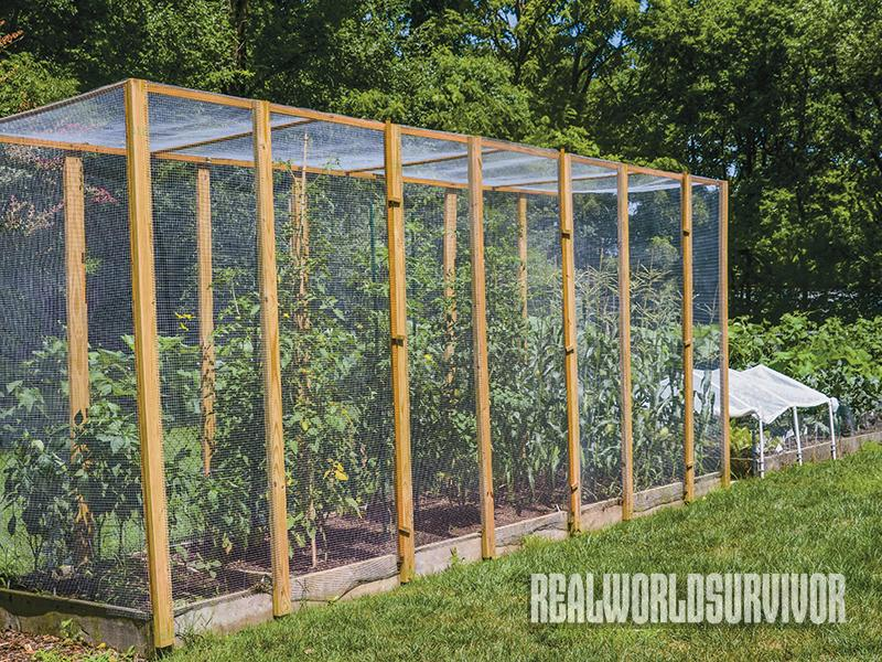 Protect Your Tomato Garden From Pesky Critters