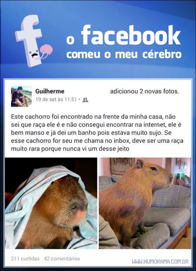 facebook-capivara-cachorro