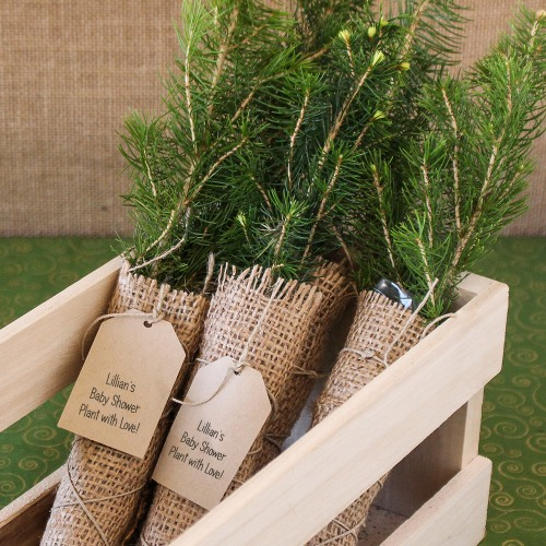 Personalized Tree Seedling Favor Evergreen Tree Seedling