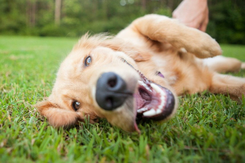 cane di erba