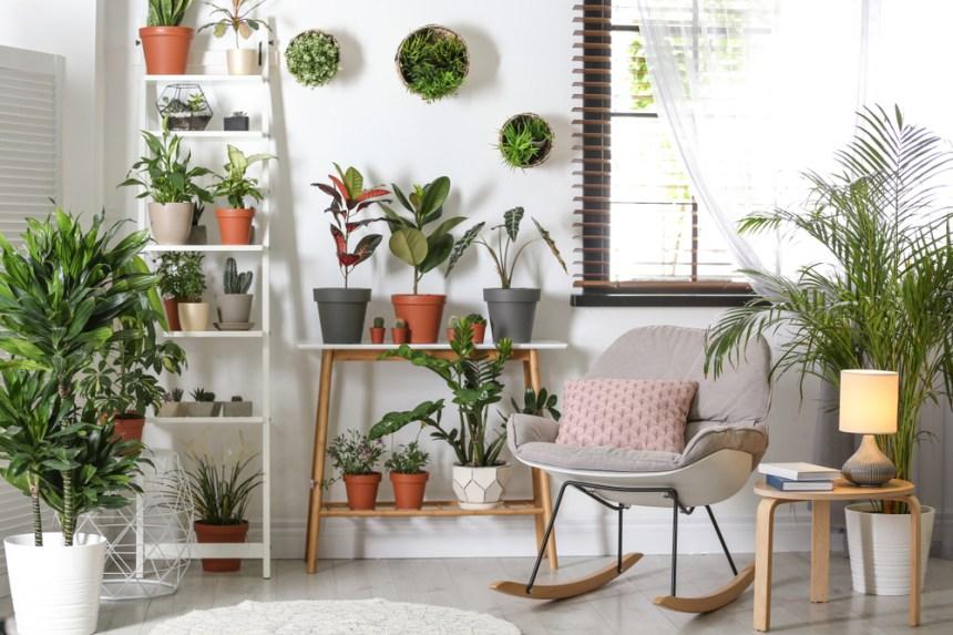 Piante d'appartamento che purificano l'aria