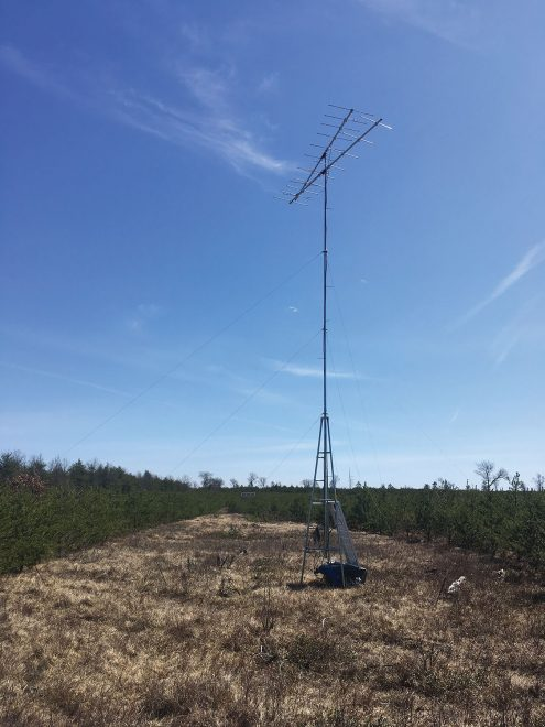 A Motus tower stands in a field in Oscoda, Michigan. More than 900 such stations track birds from at least 225 species on four continents around the globe. Photo by Nathan W. Cooper