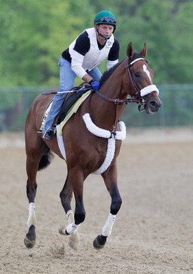BALTIMORE, MD - MAY 20:  Exercise rider Heriberto Pulgar takes Preakness entrant Mucho Macho Man over the track at Pimlico Race Course on May 20, 2011 in Baltimore, Maryland. The 136th running of the Preakness Stakes will take place on May 21.   (Photo by