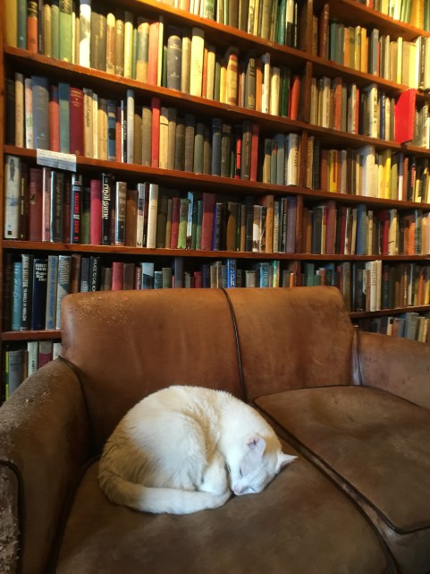 "A cat sleeps on a couch at the Shakespeare and Company bookstore in Paris France. The cat's name is ""Kitty"" - like all resident cats before it."