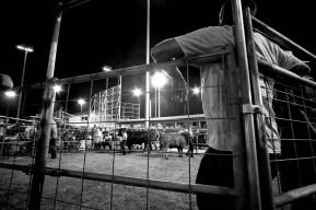 Kauai County Fair 2018 by Peter Adams.