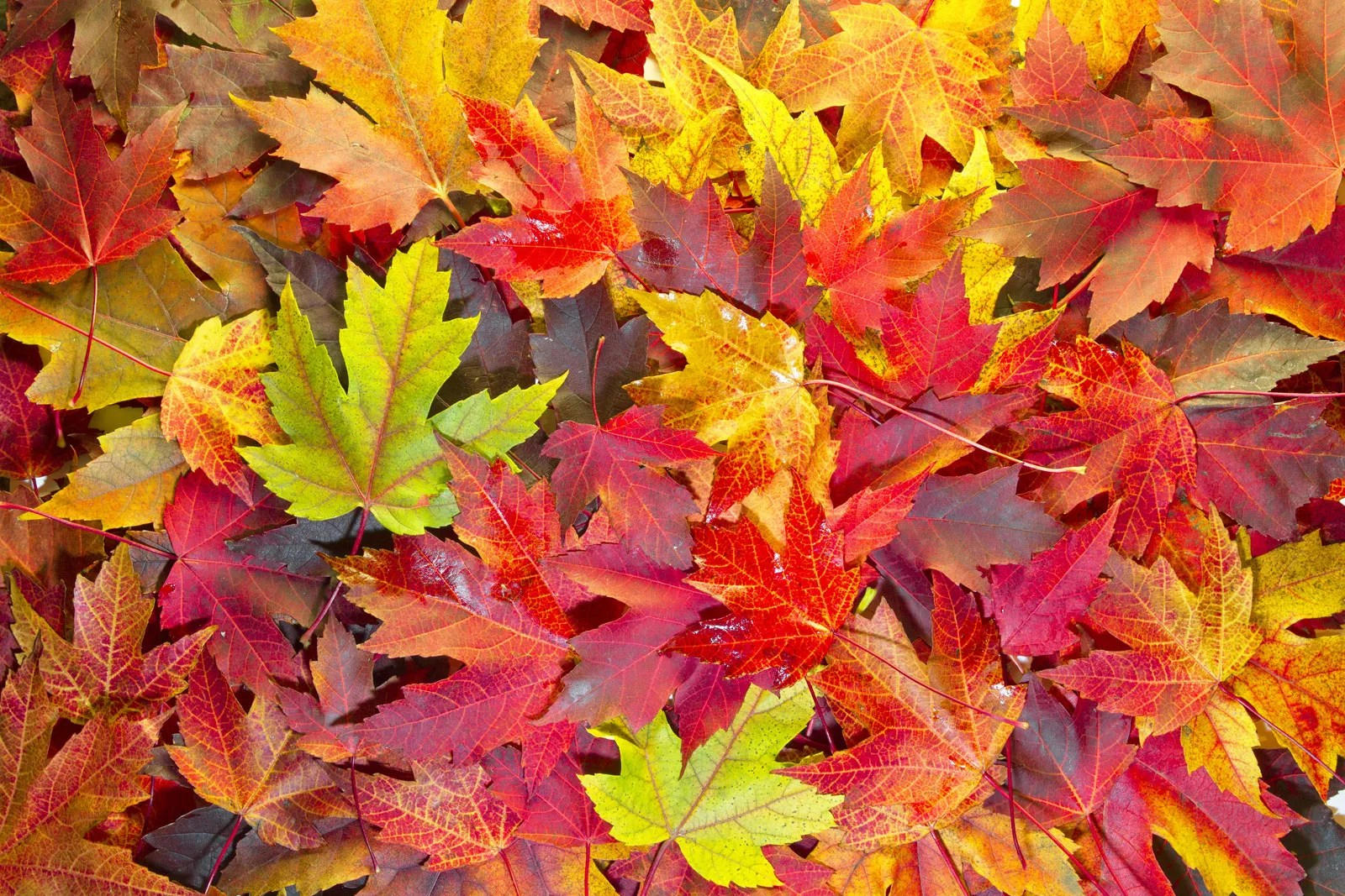 Why Do Leaves Change Colors In The Fall