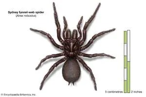 193546 050 7865670F - 9 of the World's Deadliest Spiders