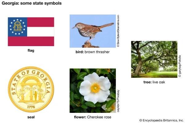 Georgia State Symbols Kids Britannica Kids Homework Help