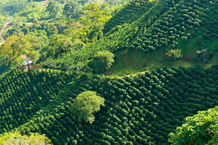 https://i2.wp.com/cdn.britannica.com/59/95559-050-835EE1EA/Coffee-plantation-Armenia-Colom.jpg?resize=696%2C464&ssl=1