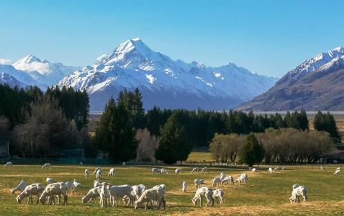 Passpod, New Zealand, Passpod Gila Diskon