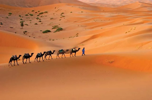 Караван верблюдов движется по песчаным дюнам пустыни Сахара, Марокко, Северная Африка