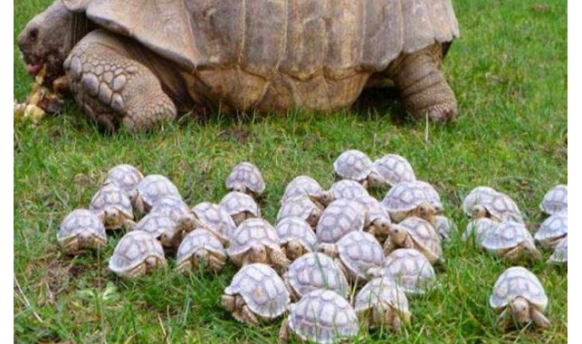 Be a Tortoise Not a Hare