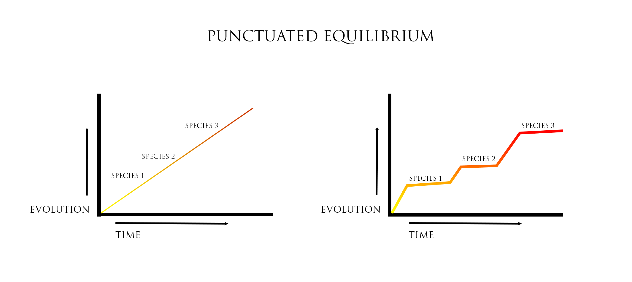 How To Change Your Life Using Punctuated Equilibrium