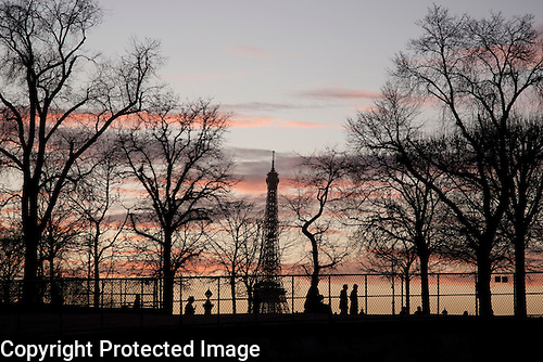 Eiffel Tower and Winter Trees, Paris, France