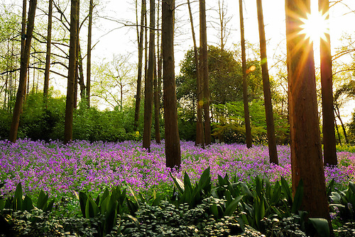 Vivid purple flowers growing among the woods