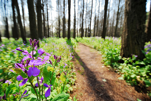Purple flowers spreading among the woods
