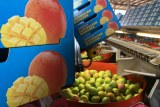 mango boxes and mangoes in a mango packing shed.