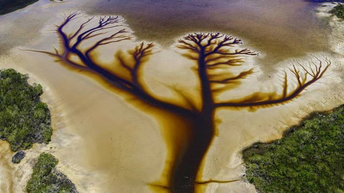 "Australia – Aerial photos of Lake Kakora in NSW show spectacular ""Tree of Life"" patterns – Chinatown, Australia"
