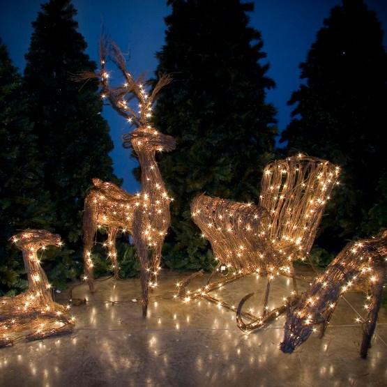 Christmas Lights Yard