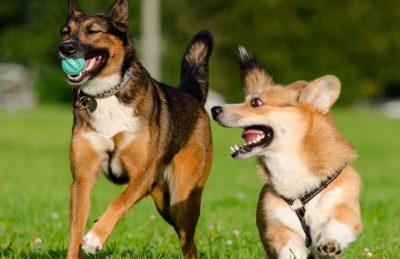 Test psicológico: ¿Como es tu personalidad según tu animal preferido?