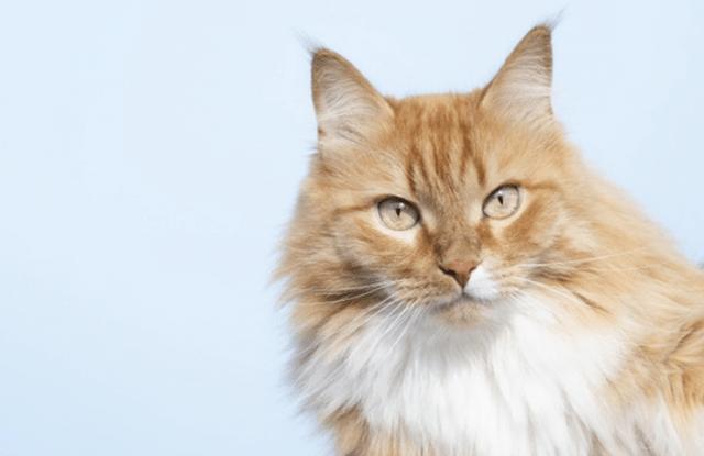 Cómo hablar con un gato (e interpretar correctamente sus gestos)