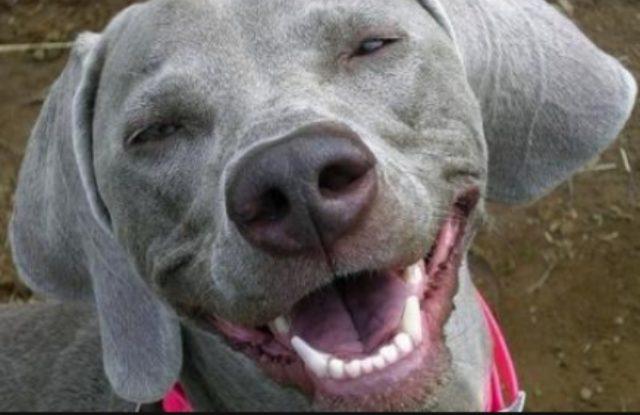 Confirmaron que los perros sonríen si están felices
