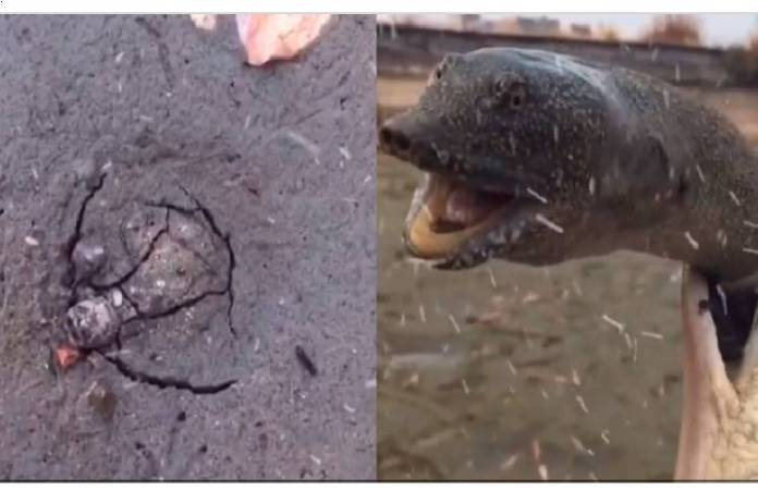 Descubrió una extraña grieta en la arena y debajo había una tortuga gigante
