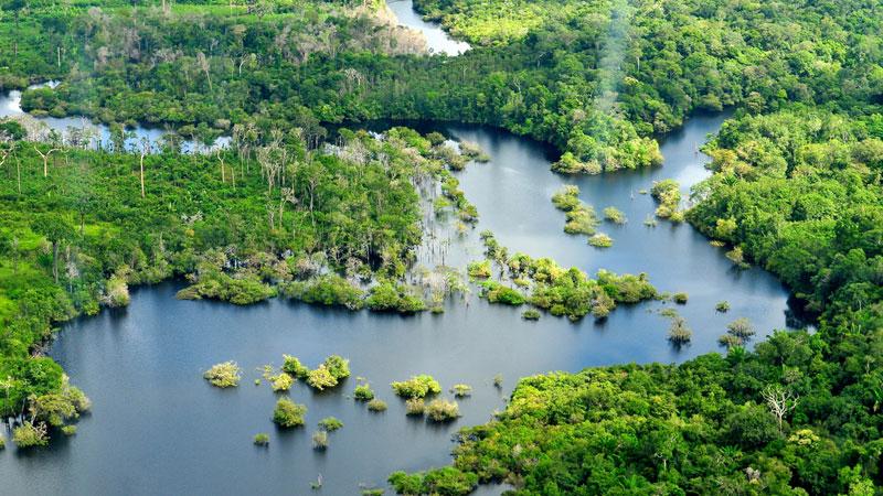 Image result for image of brazil rainforest