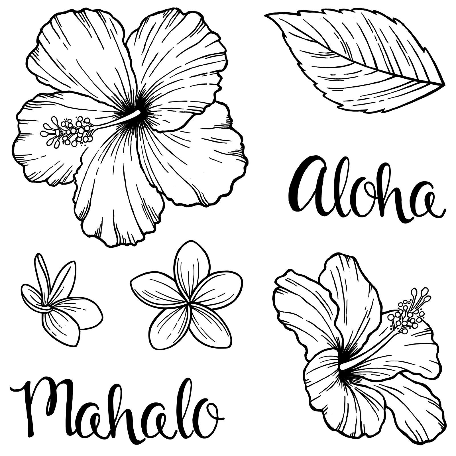 Hawaiian Hibiscus (B1527)