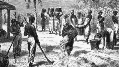 This engraving shows slaves harvesting cotton on a plantation in the South in the 1800s.