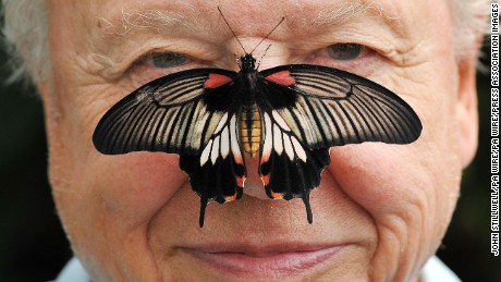 David Attenborough with a south east Asian Great Mormon Butterfly on his nose