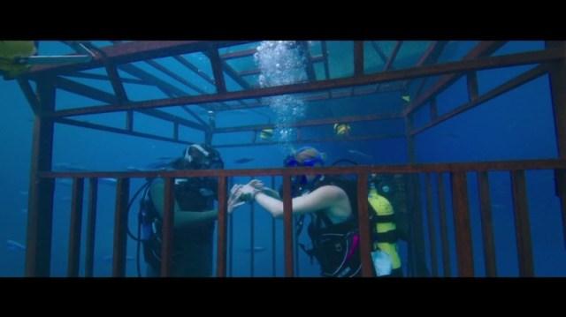 '47 Meters Down' has sharks, not much depth - CNN