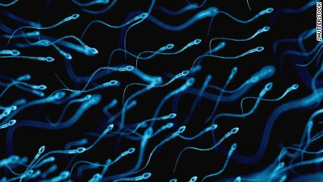 Sperm counts of Western men plummeting, analysis finds