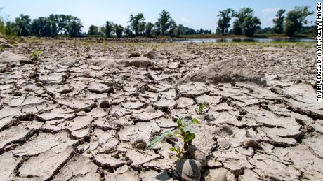 The partly dried-out bed of the River Danube is pictured in Mariaposching, southern Germany, on Wednesday.