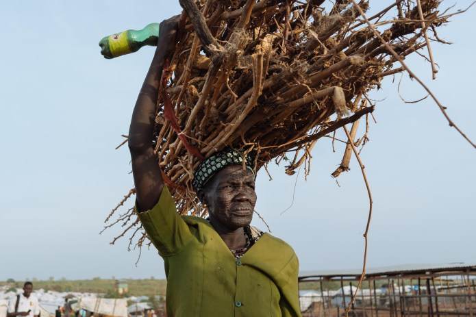 A woman photographed carrying firewood home from the forest.