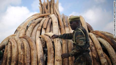 Super sniffer dogs help Kenya crack down on illegal ivory poaching