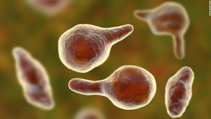 Mycoplasma genitalium bacteria, illustration. It is a sexually transmitted organism that causes non-gonococcal urethritis in men and several inflammatory reproductive tract syndromes in women such as cervicitis, pelvic inflammatory disease, and infertility.